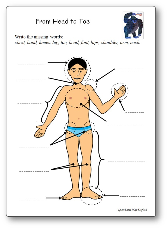 From Head to Toe Body Parts Printable Activity