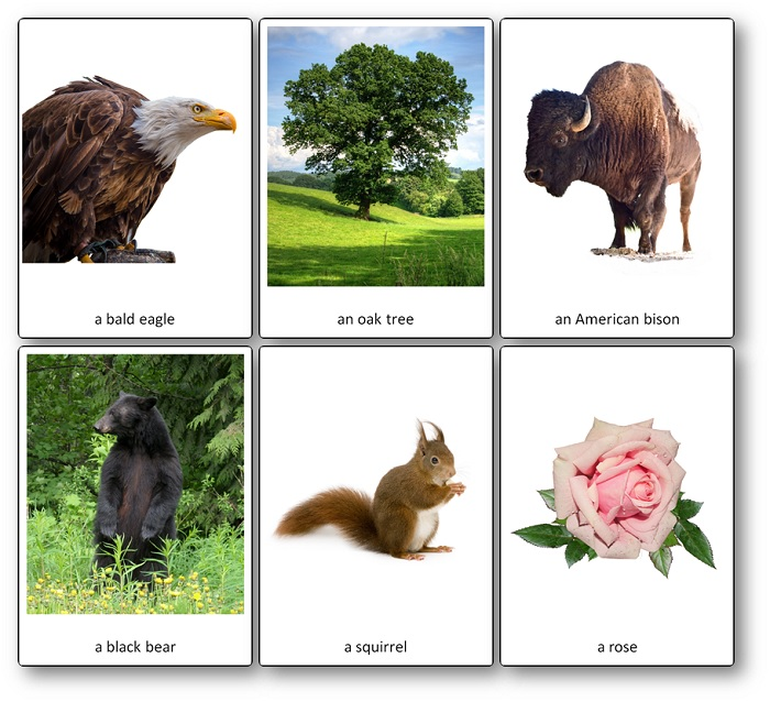 Symbols,Emblems and Cultural Icons of the United States Picture Cards
